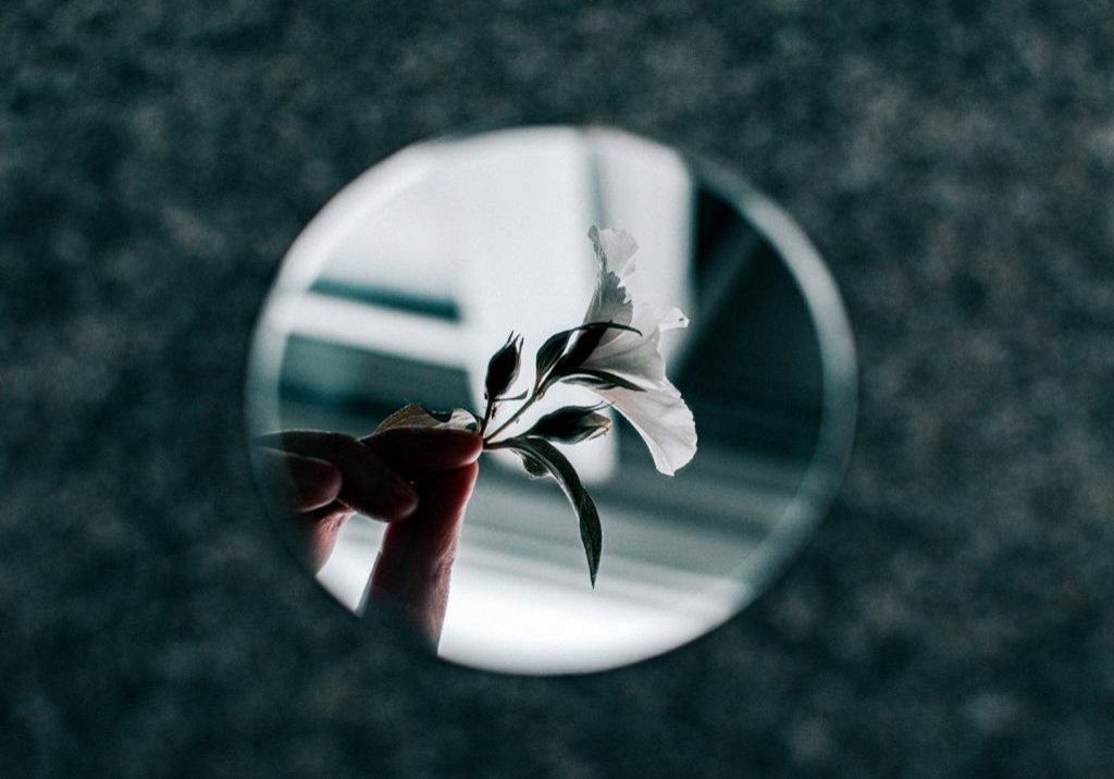 white-petaled-flower-reflection-from-small-round-mirror-2412361